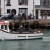 Dolphins Come to Weymouth Harbour